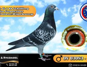 100% G i H Schilling – linia Superstar – Engels / Deleus / Eijerkamp