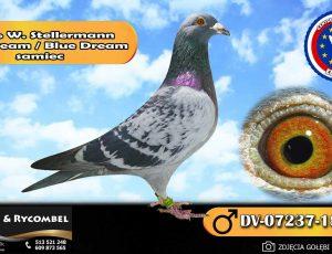 100% Werner Stellermann – Blue Dream / Blue Dream